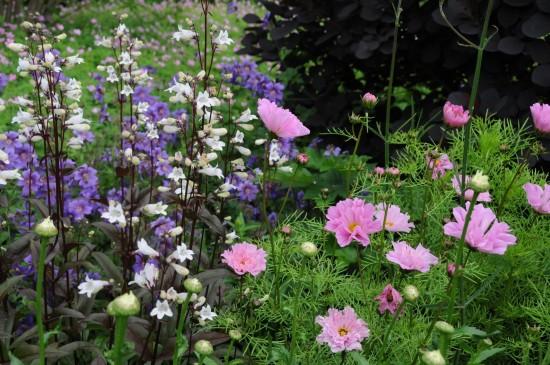 13_15 Jeden Sommer einen neuen Garten