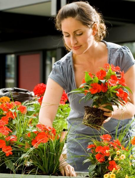 Blütenstars für den Schattenbalkon gedeihen ohne viel Sonne