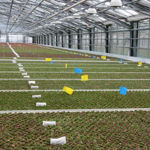 Gr n genie en seite 5 das gr ne medienhaus for Kleine fliegen in topfpflanzen