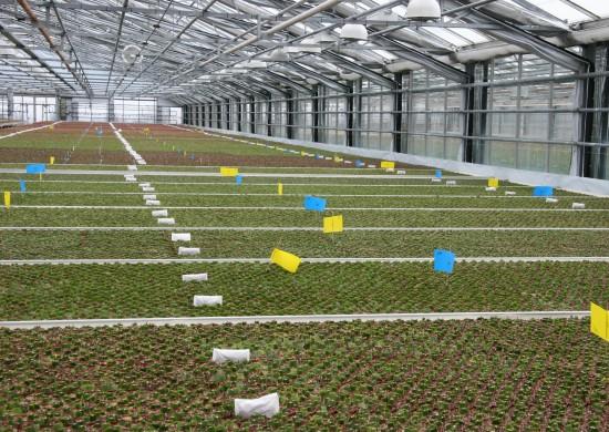 Mit Zierpflanzen aus deutscher Produktion gehen Verbraucher auf Nummer sicher