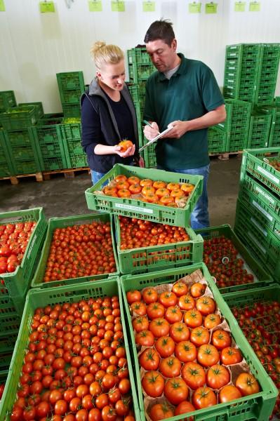 Für heiße Tage: erfrischende Gurken und Tomaten aus Ihrer Region