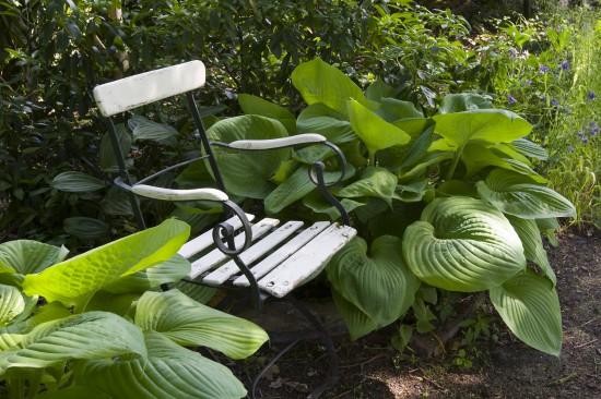 GMH_2013_23_12 Muse-Stunden im Garten - Sitzplätze mit Stauden