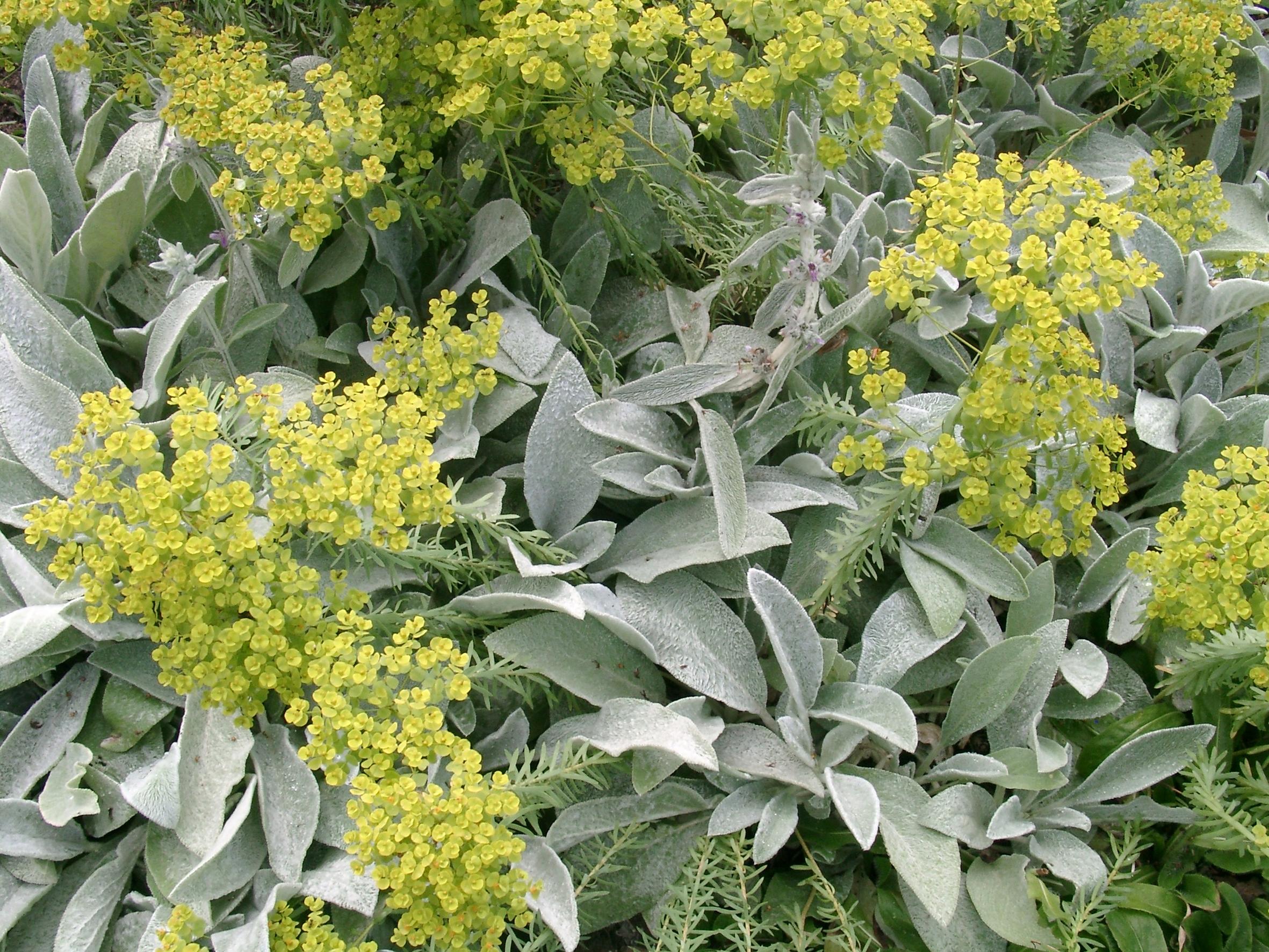 weitere Bilder zu: Silbertöne im Garten – vermittelnd – verbindend – einfach schön