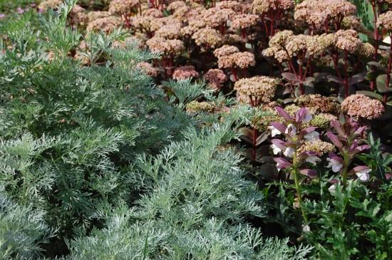 Silbertöne im Garten – vermittelnd – verbindend – einfach schön