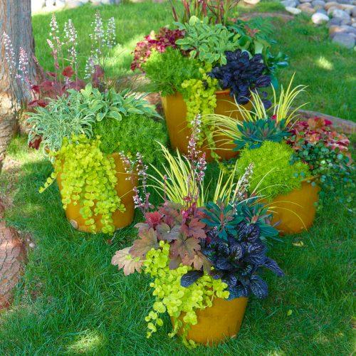 Auf zum großen Finale: Mit leuchtenden Blüten und Gräserfontänen feiert die Natur den Herbst