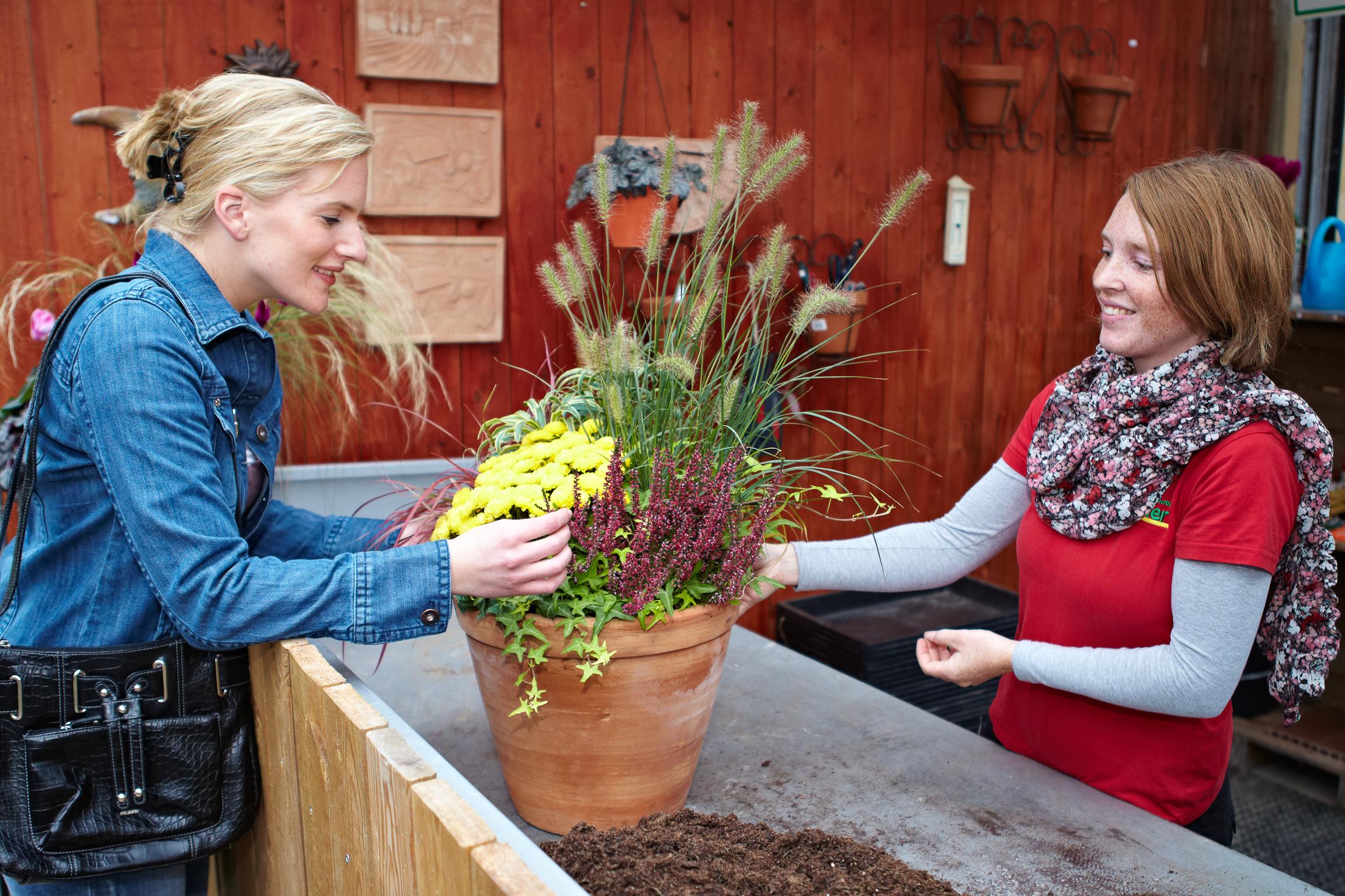 Der Herbst ist die Jahreszeit der Genießer – Gräserzauber und Blütenschmuck im Kübel