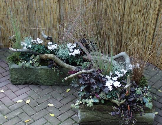Die neuen Alpenveilchen – eine Zimmerpflanze wandert aus
