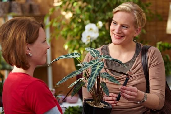 Pflegeleichte Mitbewohner: Viele Grünpflanzen sind sehr genügsam