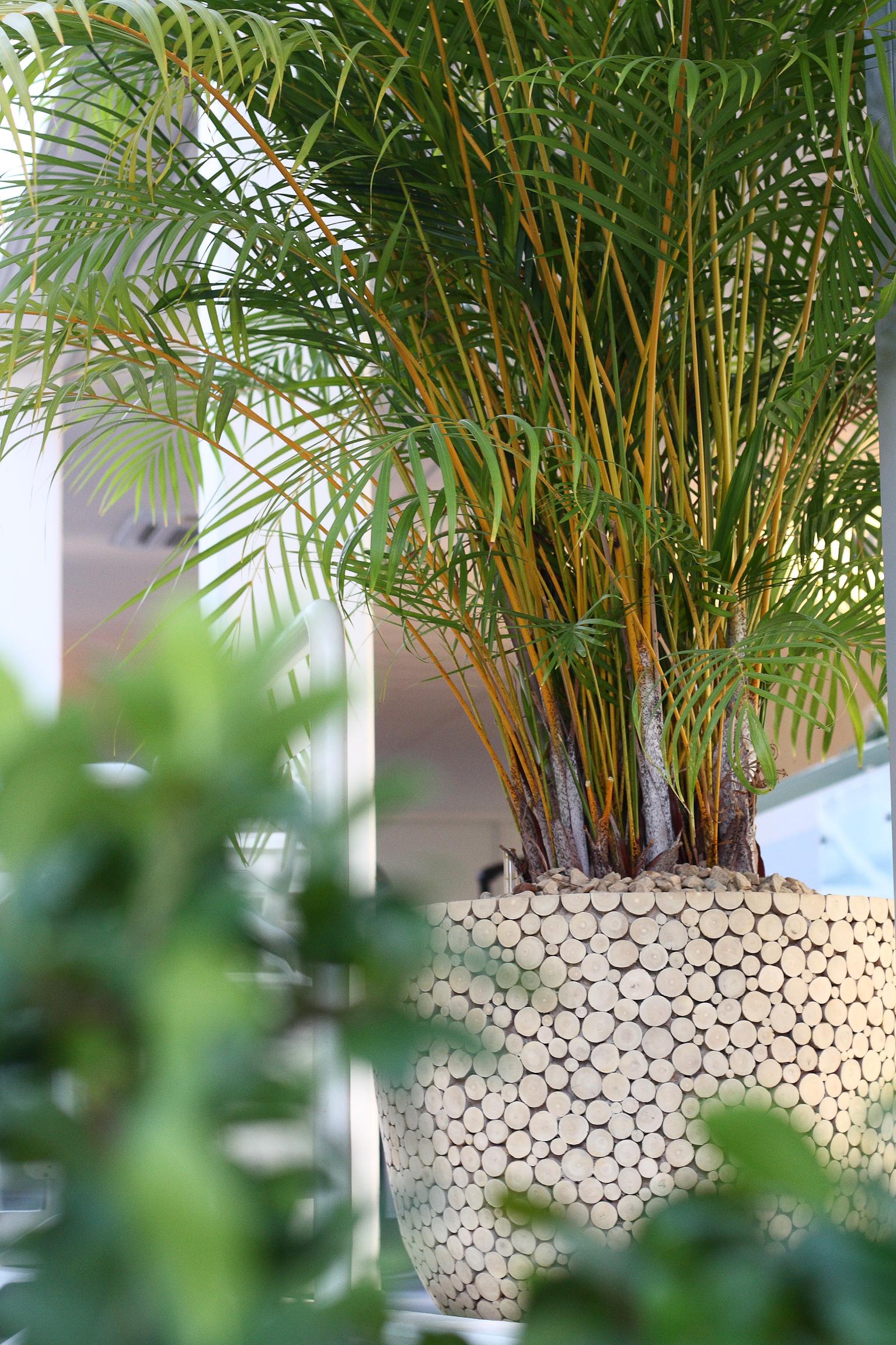 Grüne Expertise: Zimmerpflanzen top in Schuss