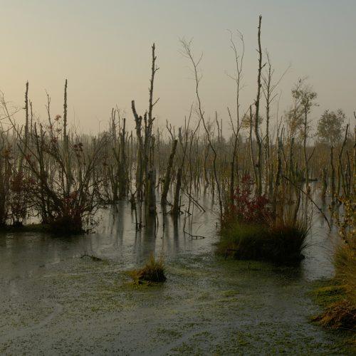 Moorböden: Wiedervernässung als Klimaschutz