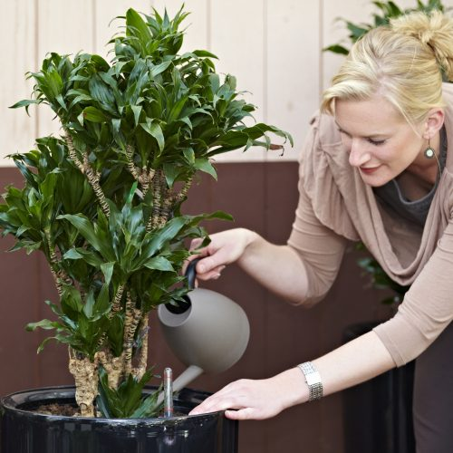 zimmerpflanzen seite 3 das gr ne medienhaus. Black Bedroom Furniture Sets. Home Design Ideas