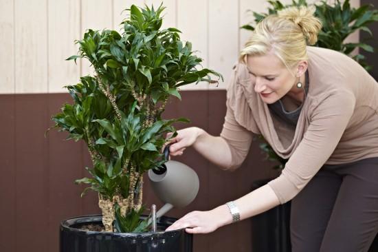 Hydrokultur sorgt für schöne Pflanzen und gesunde Menschen