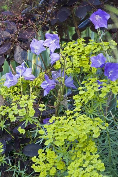 Schwebende Blüten