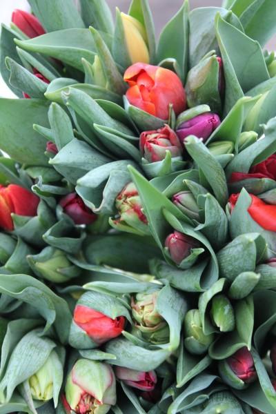 GMH_2014_11_13_Tulpen im Rheinland - nah am Kunden