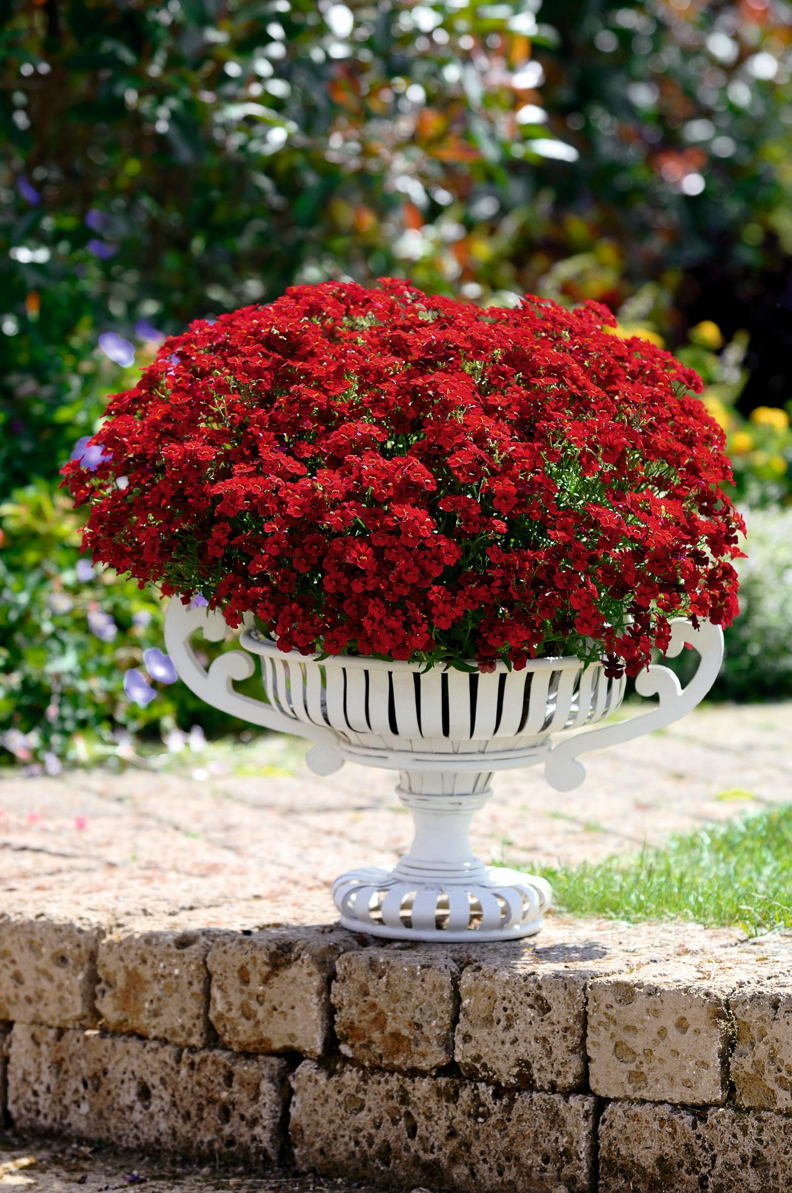 das grüne medienhaus » beet- & balkonpflanzen, Gartengerate ideen