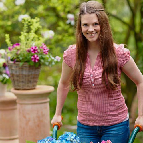 Innovative Züchter verhelfen Hortensien zu knalligen Farben