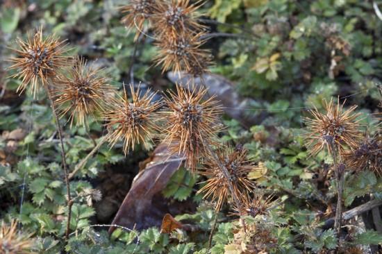 01 Gut gewappnet: Wintergrüne Stauden machen den Garten auch in der kalten Jahreszeit zum Hingucker. Nach dem Sommer beginnt die Pflanzzeit.