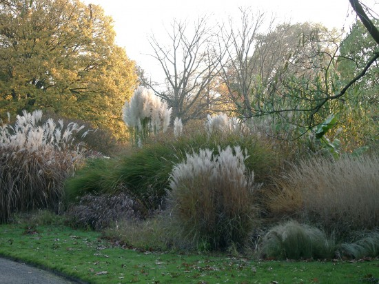 04 Gut gewappnet: Wintergrüne Stauden machen den Garten auch in der kalten Jahreszeit zum Hingucker. Nach dem Sommer beginnt die Pflanzzeit.