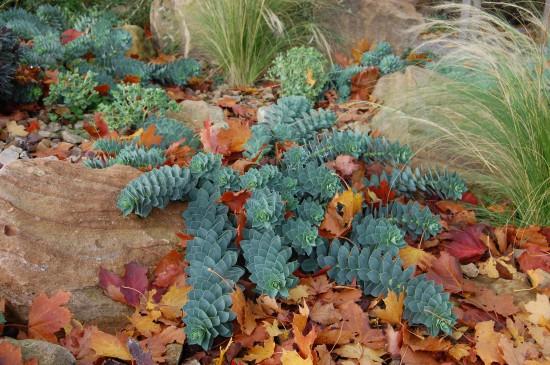 05 Gut gewappnet: Wintergrüne Stauden machen den Garten auch in der kalten Jahreszeit zum Hingucker. Nach dem Sommer beginnt die Pflanzzeit.