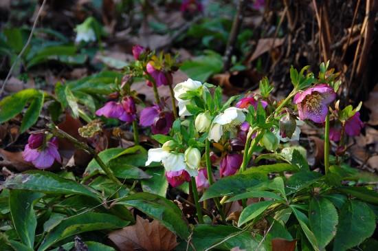 07 Gut gewappnet: Wintergrüne Stauden machen den Garten auch in der kalten Jahreszeit zum Hingucker. Nach dem Sommer beginnt die Pflanzzeit.
