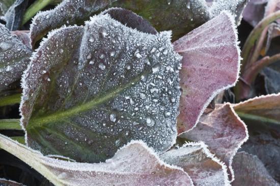 09 Gut gewappnet: Wintergrüne Stauden machen den Garten auch in der kalten Jahreszeit zum Hingucker. Nach dem Sommer beginnt die Pflanzzeit.