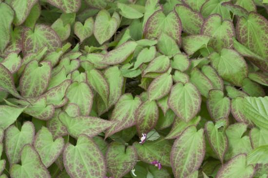 11 Gut gewappnet: Wintergrüne Stauden machen den Garten auch in der kalten Jahreszeit zum Hingucker. Nach dem Sommer beginnt die Pflanzzeit.