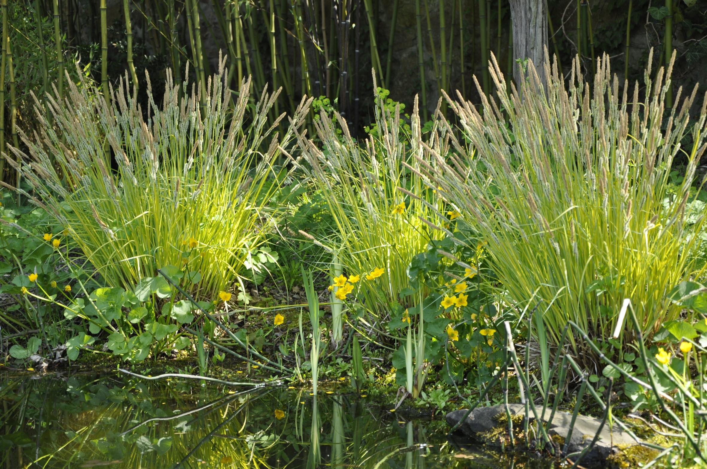 Staude des Jahres 2015: Die Segge – Ein Gras für alle Fälle