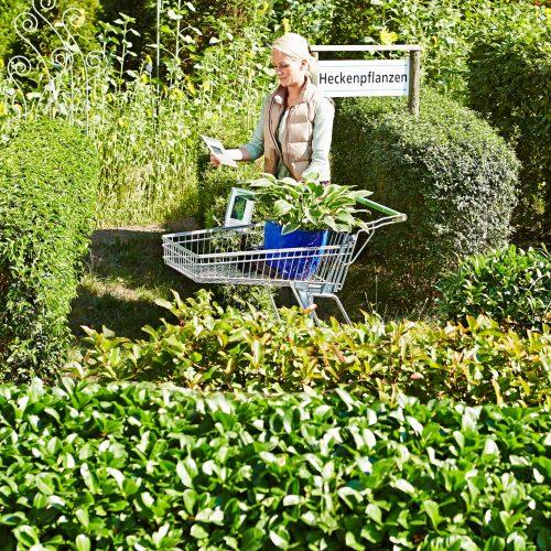 pflanzen im herbst seite 2 das gr ne medienhaus. Black Bedroom Furniture Sets. Home Design Ideas