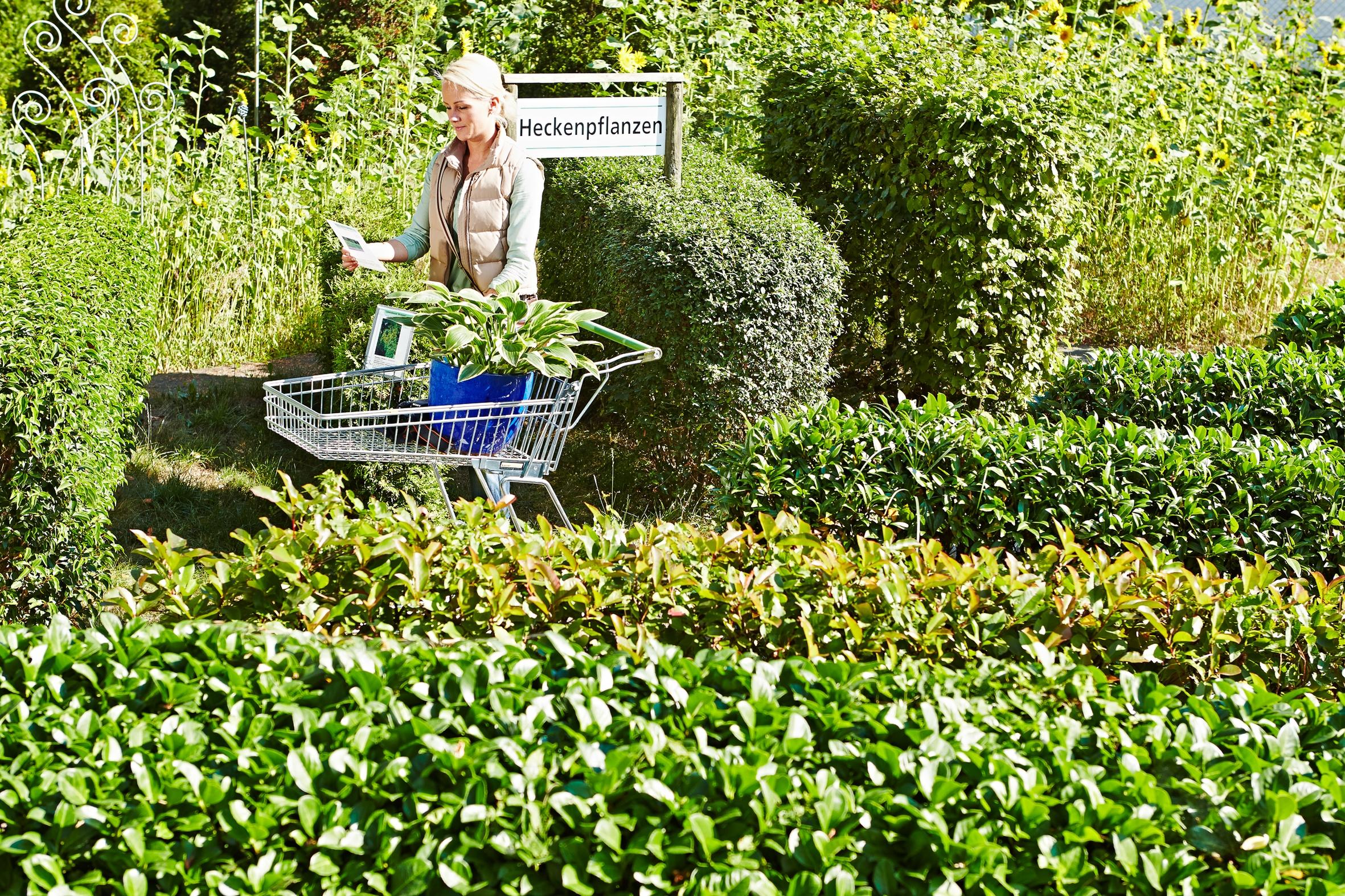 Jetzt ist Pflanzzeit für grüne Wände im Garten