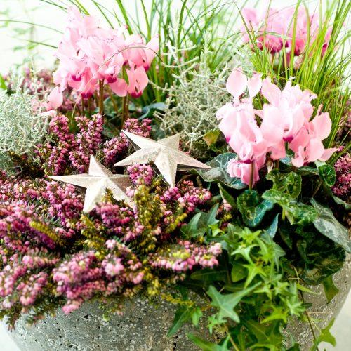 Winterblüten aus der Gärtnerei verschönern die Adventszeit