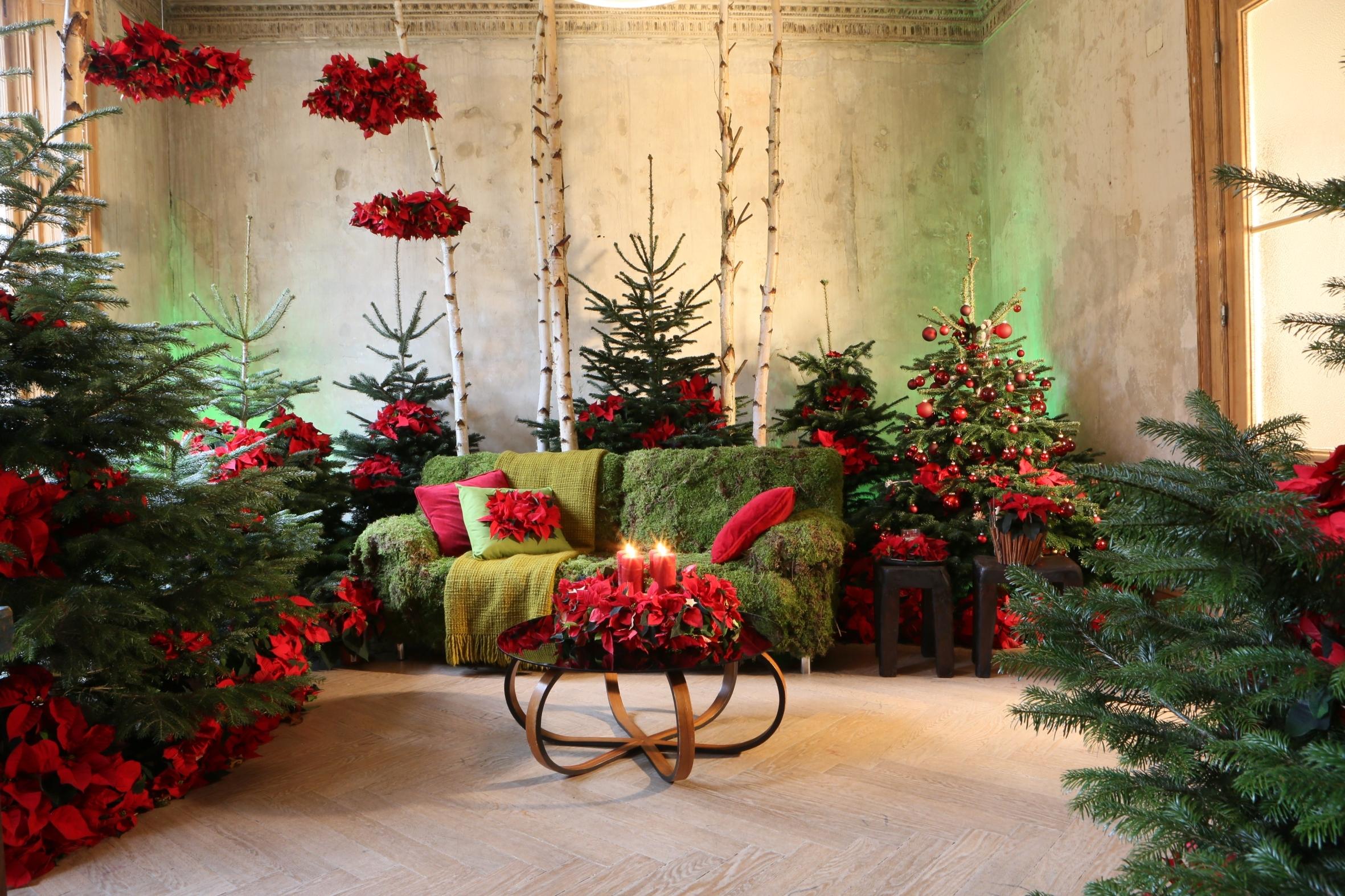 Once upon a star m rchen arrangements mit dem weihnachtsstern lassen r ume in moderner - Weihnachtsstern dekorieren ...