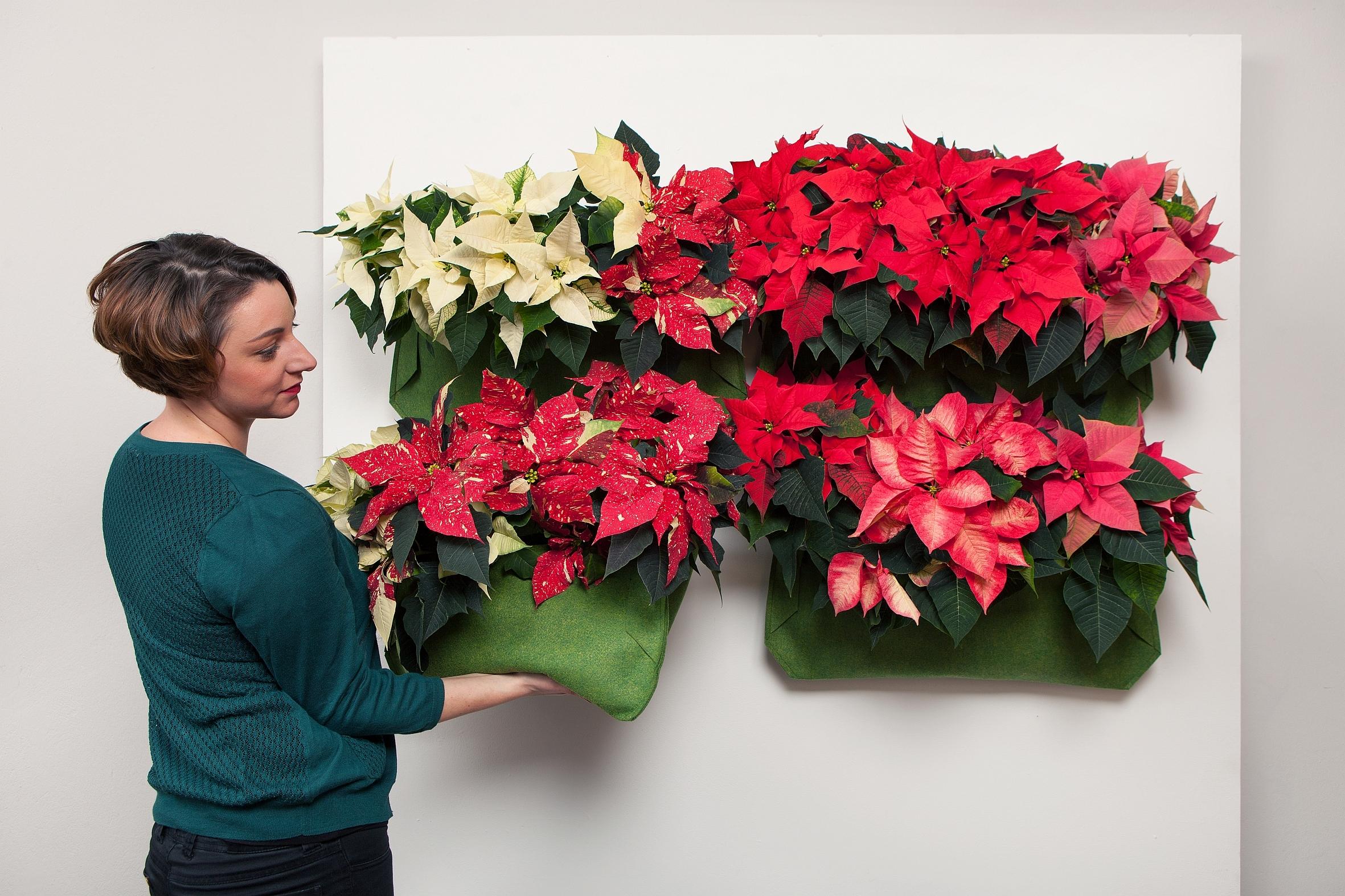 es war einmal m rchenhafte dekorationsideen mit dem weihnachtsstern das gr ne medienhaus. Black Bedroom Furniture Sets. Home Design Ideas