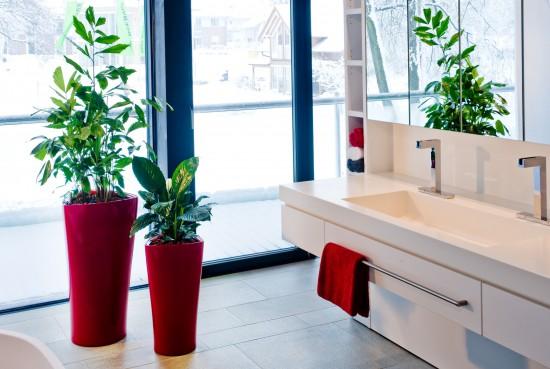 Moderne Gefäße verwandeln Hydrokulturpflanzen in Designobjekte
