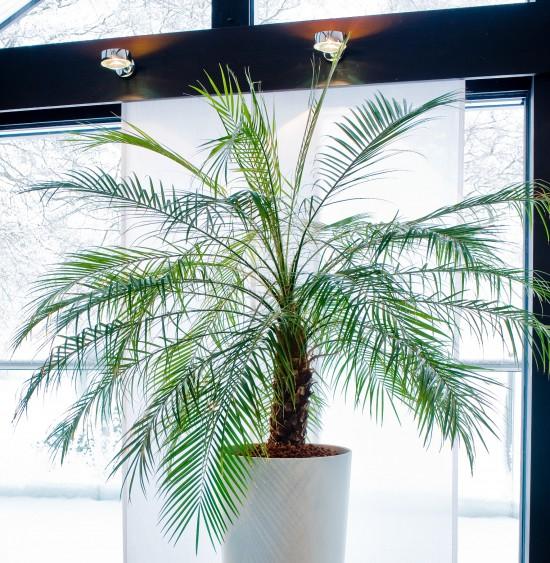 GMH_2015_05_01 Drei Faustregeln braucht es zum Erfolg mit Zimmerpflanzen in Hydrokultur