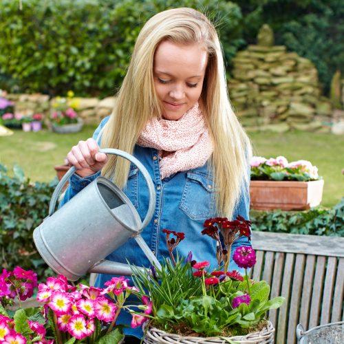 beet balkonpflanzen seite 7 das gr ne medienhaus. Black Bedroom Furniture Sets. Home Design Ideas