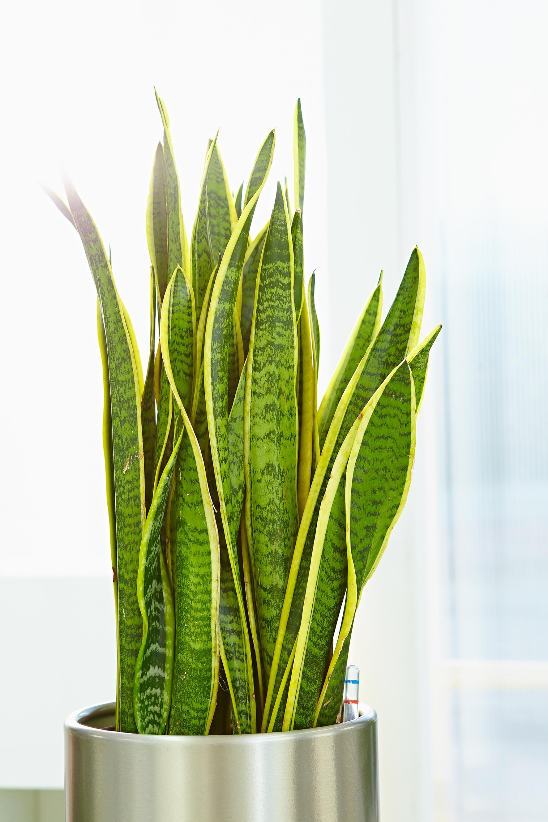 Zimmerpflanzen im Gleichgewicht
