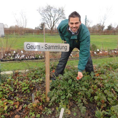 Deutschlands größte Nelkenwurz-Sammlung (Geum) mit dem Qualitätslabel des Netzwerkes Pflanzensammlungen ausgezeichnet