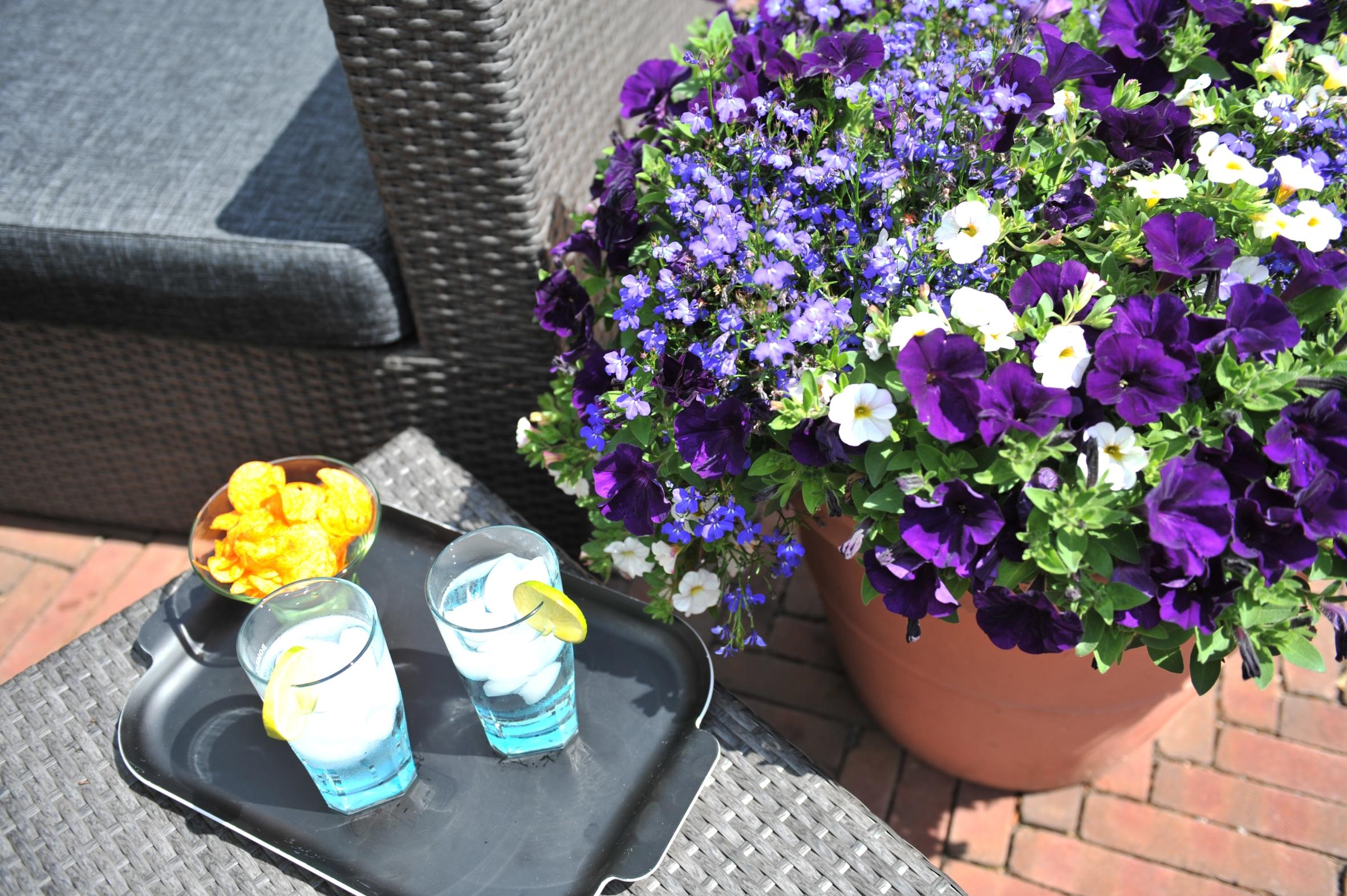 coole kombi in blau und wei arrangement havelperle wird pflanze des jahres 2015 in berlin. Black Bedroom Furniture Sets. Home Design Ideas