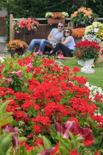 Beet- und Balkonpflanzen: je nach Standort die richtigen Sorten wählen