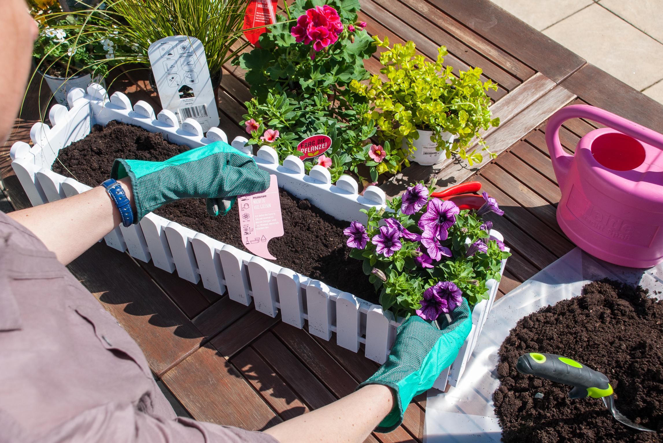 balkonk sten und k bel die richtige pflanzen kombination macht den unterschied das gr ne. Black Bedroom Furniture Sets. Home Design Ideas