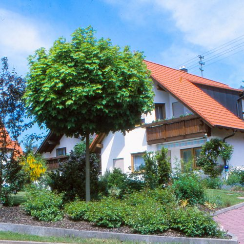 Ein Hausbaum sollte gut gewählt sein