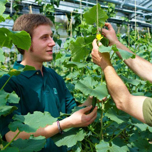 Gemüsegärtner sorgen für Vitaminkick aus heimischer Ernte