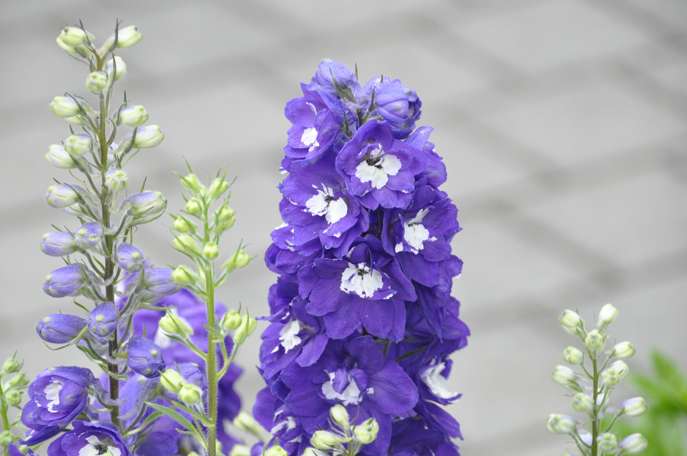 """weitere Bilder zu """"Frischekick für den Garten: Blütenkombis in Weiß-Blau"""""""