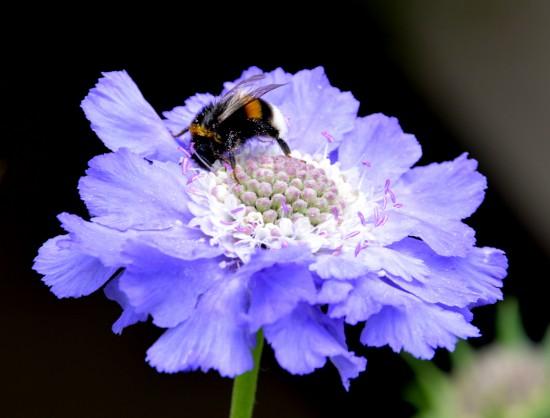 Frischekick für den Garten: Blütenkombis in Weiß-Blau