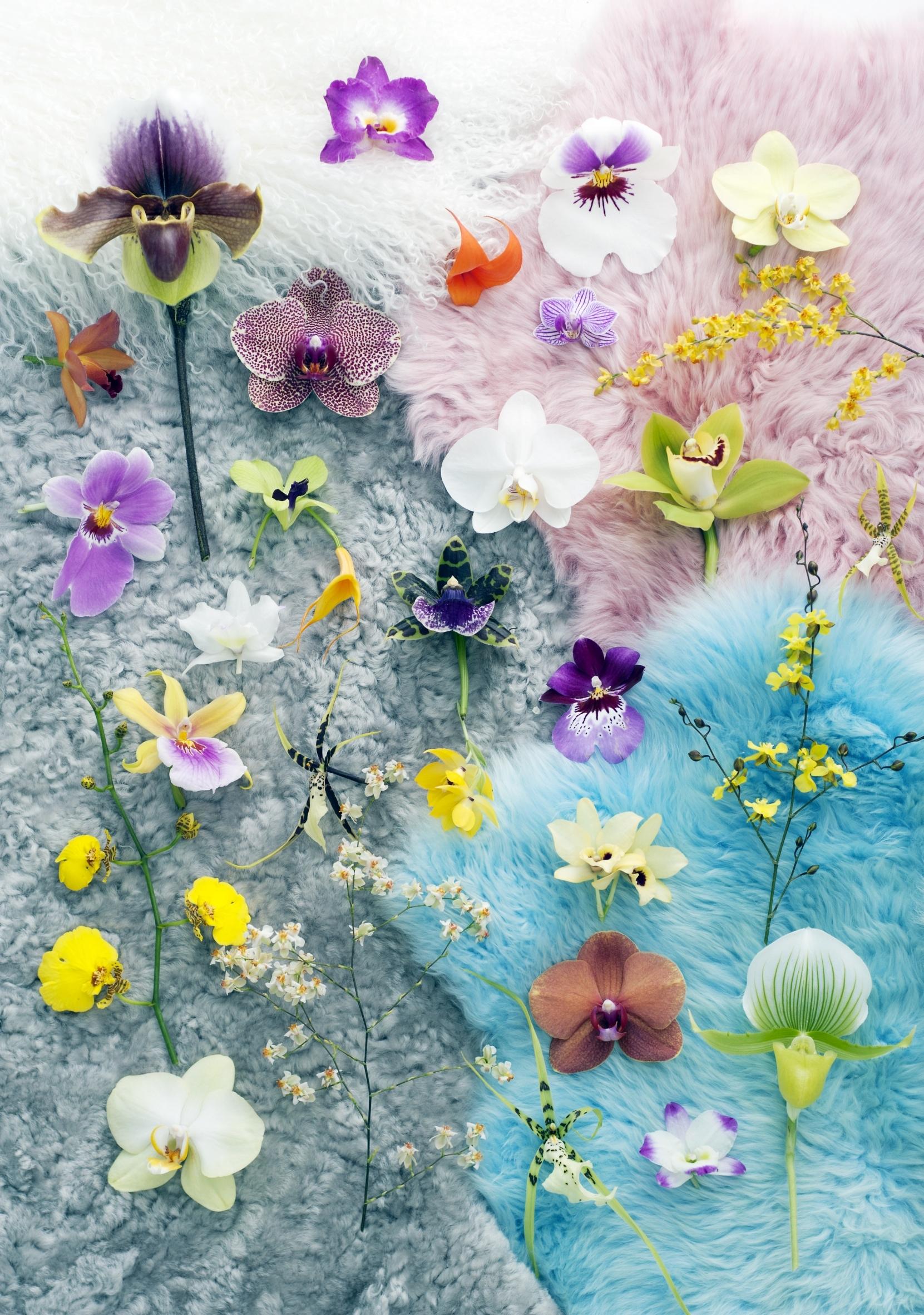 Blüten-Event am 3. September zum Tag der Orchidee
