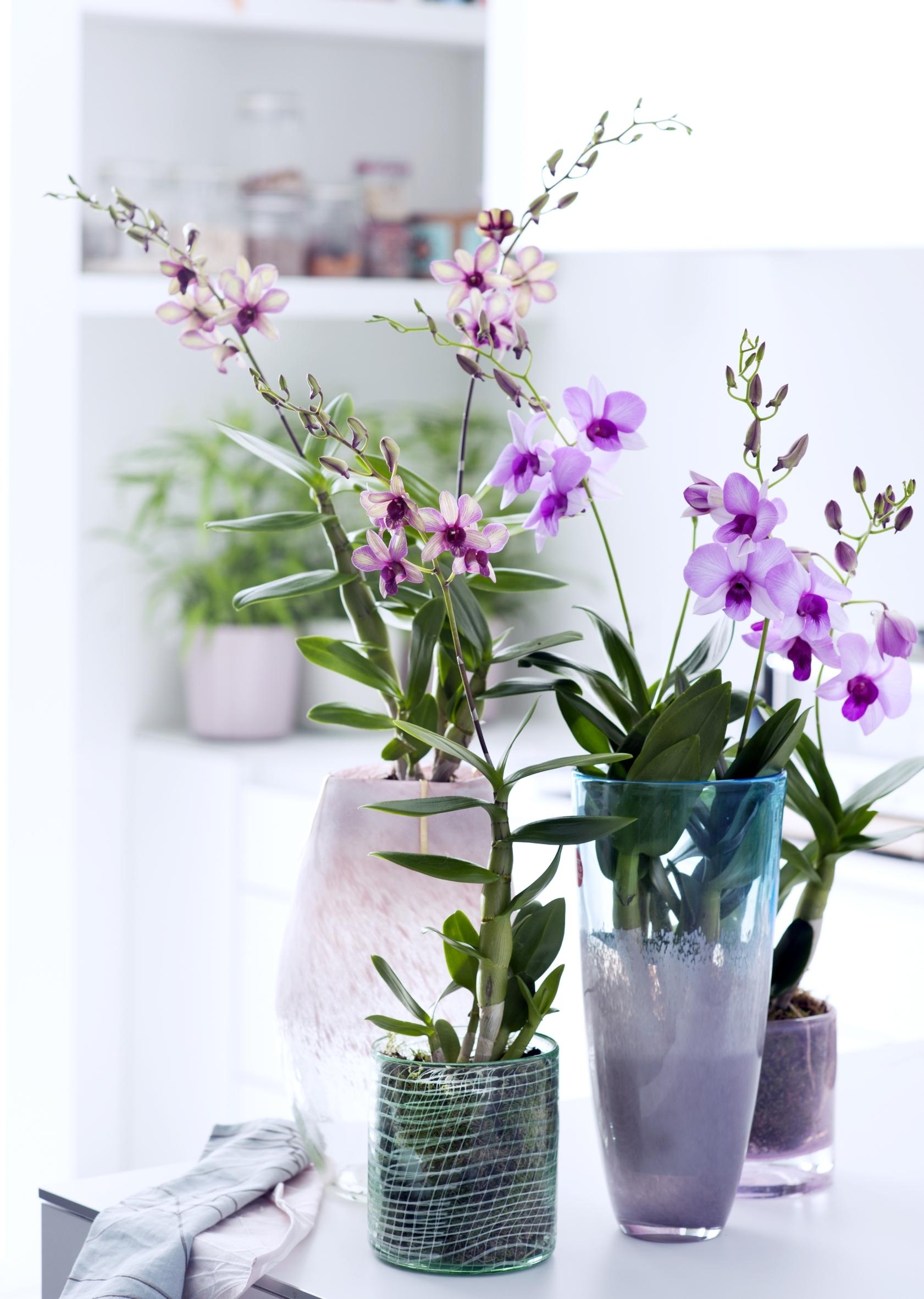 bl ten event am 3 september zum tag der orchidee das gr ne medienhaus. Black Bedroom Furniture Sets. Home Design Ideas
