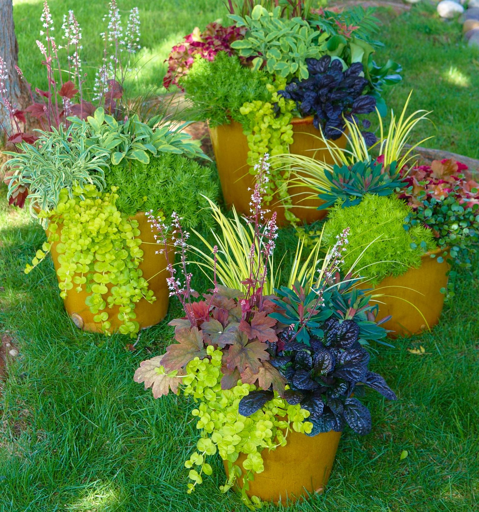 Farbenfeuerwerk im Herbst