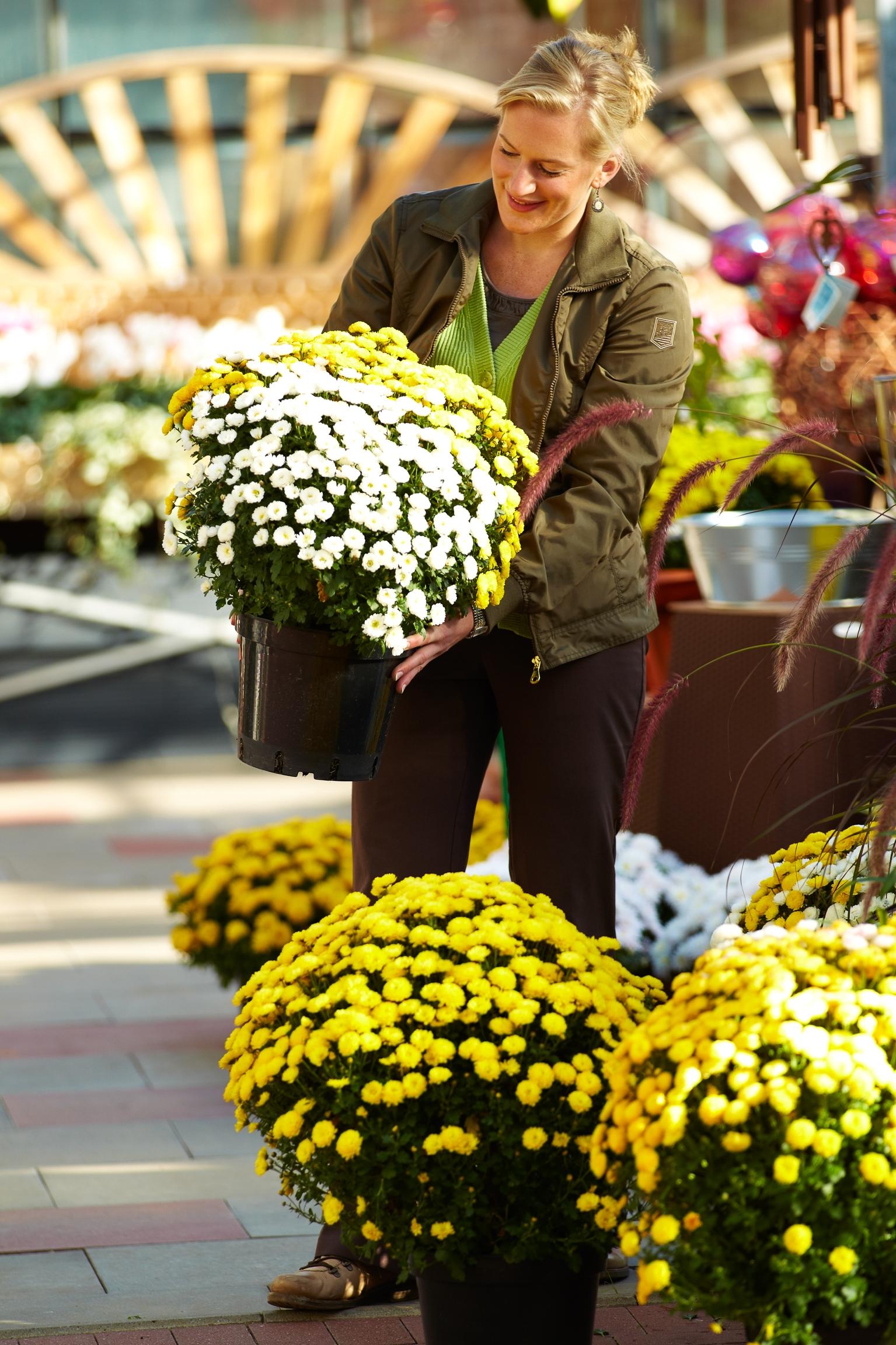 Herbstpflanzen in warmen Farben sind echte Stimmungsaufheller
