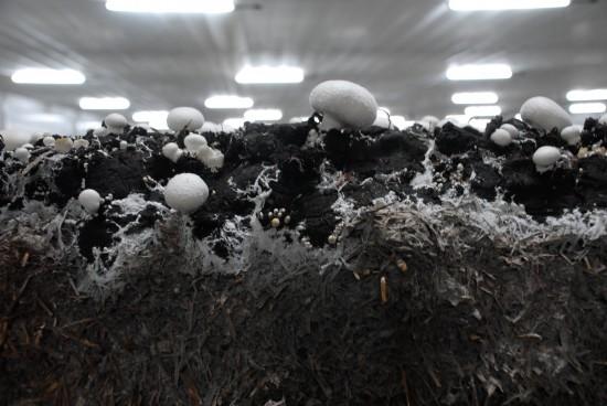 Deckerde - die schützende Schicht über den Pilzen