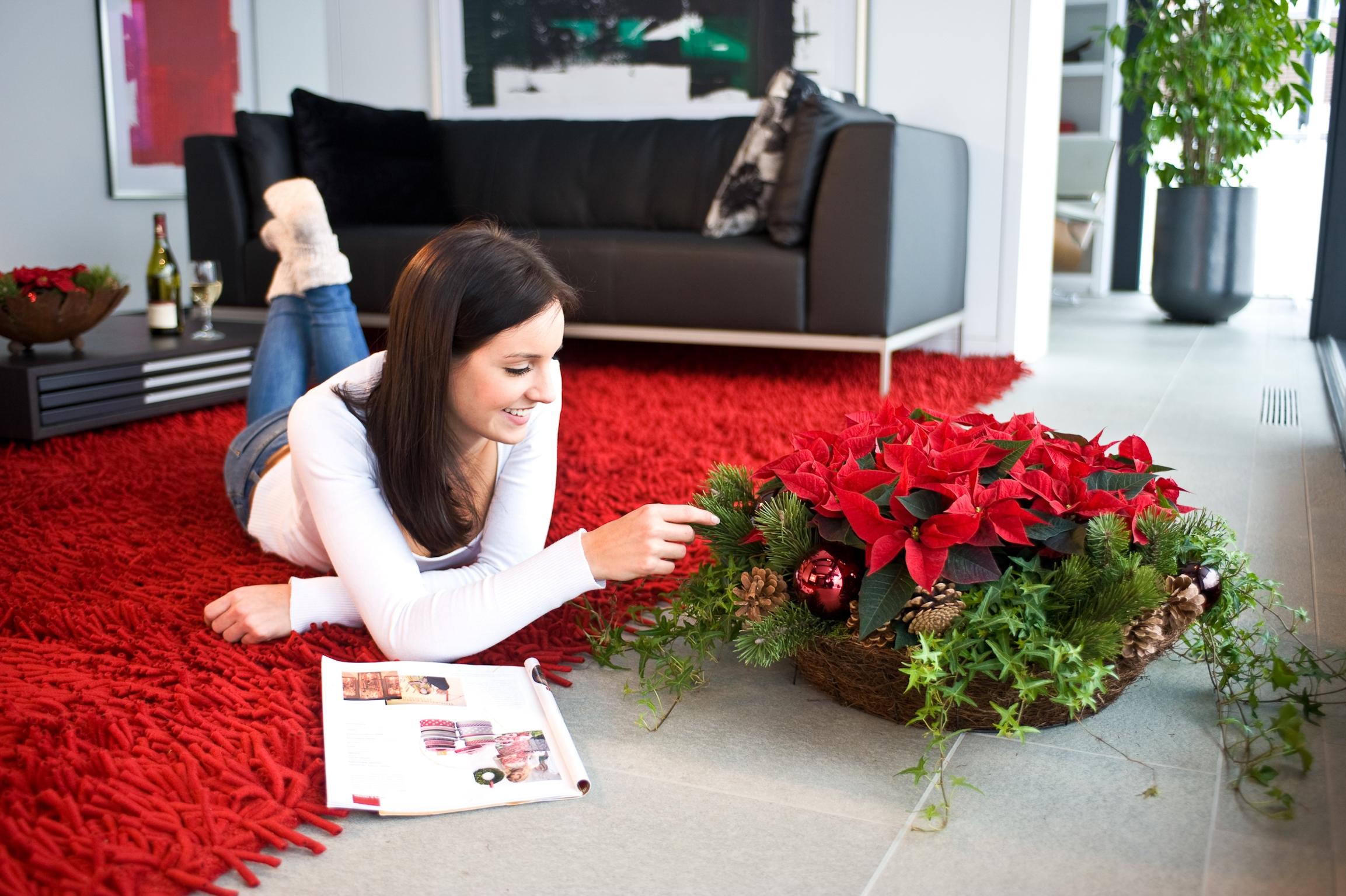 Weihnachtssterne sorgen in der Weihnachtszeit für Wohlfühl-Momente und festliche Stimmung